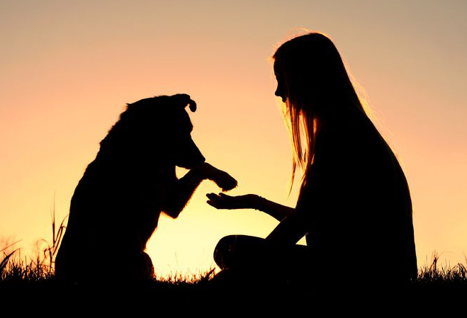 23295334 - a girl is sitting outside in the grass, shaking hands with her german shepherd dog, silhouetted against the sunsetting sky